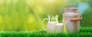 Jarra de leite no campo