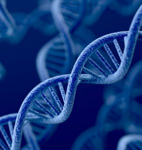 O objetivo do melhoramento genético é o de avaliar características de interesse econômico em um animal para obter a predição dos valores genéticos.