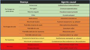 principais doenças do feijoeiro