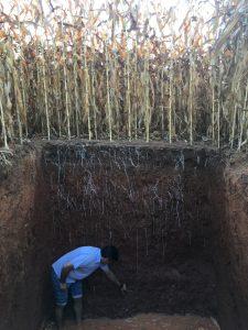 escavando trincheira
