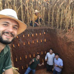 escavando trincheira para análise de raízes do milho