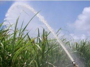irrigação cana de açúcar