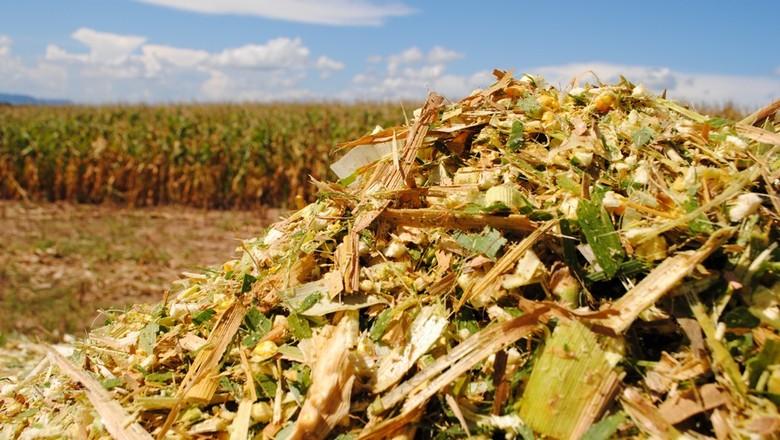 Produção de silagem de milho com qualidade – Você sabe como fazer?