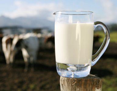 jarro de leite com vacas ao fundo