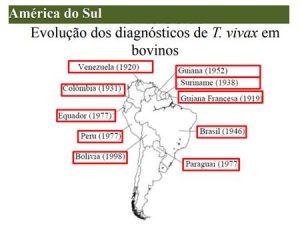 Tripanossomose no Brasil