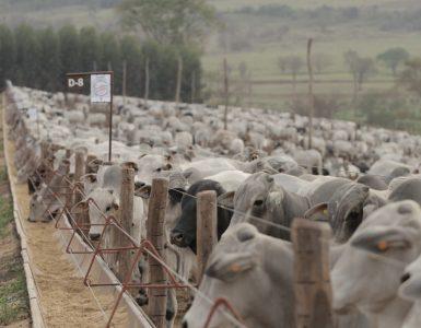 suplementos múltiplos e concentrados para gado de corte