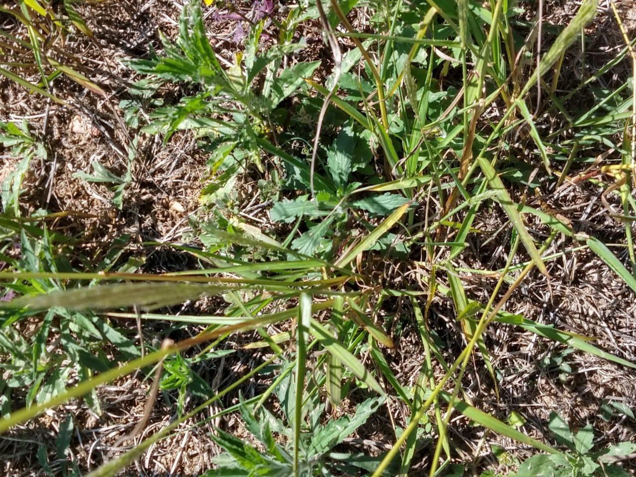 herbicidas pré-emergentes