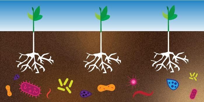 Microrganismos