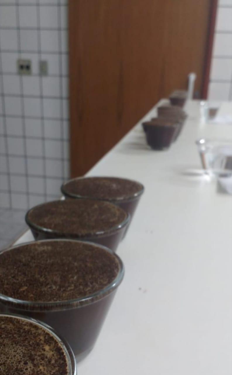 Classificação sensorial do café