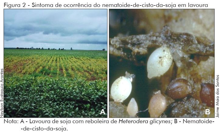 Nematoides cisto de soja