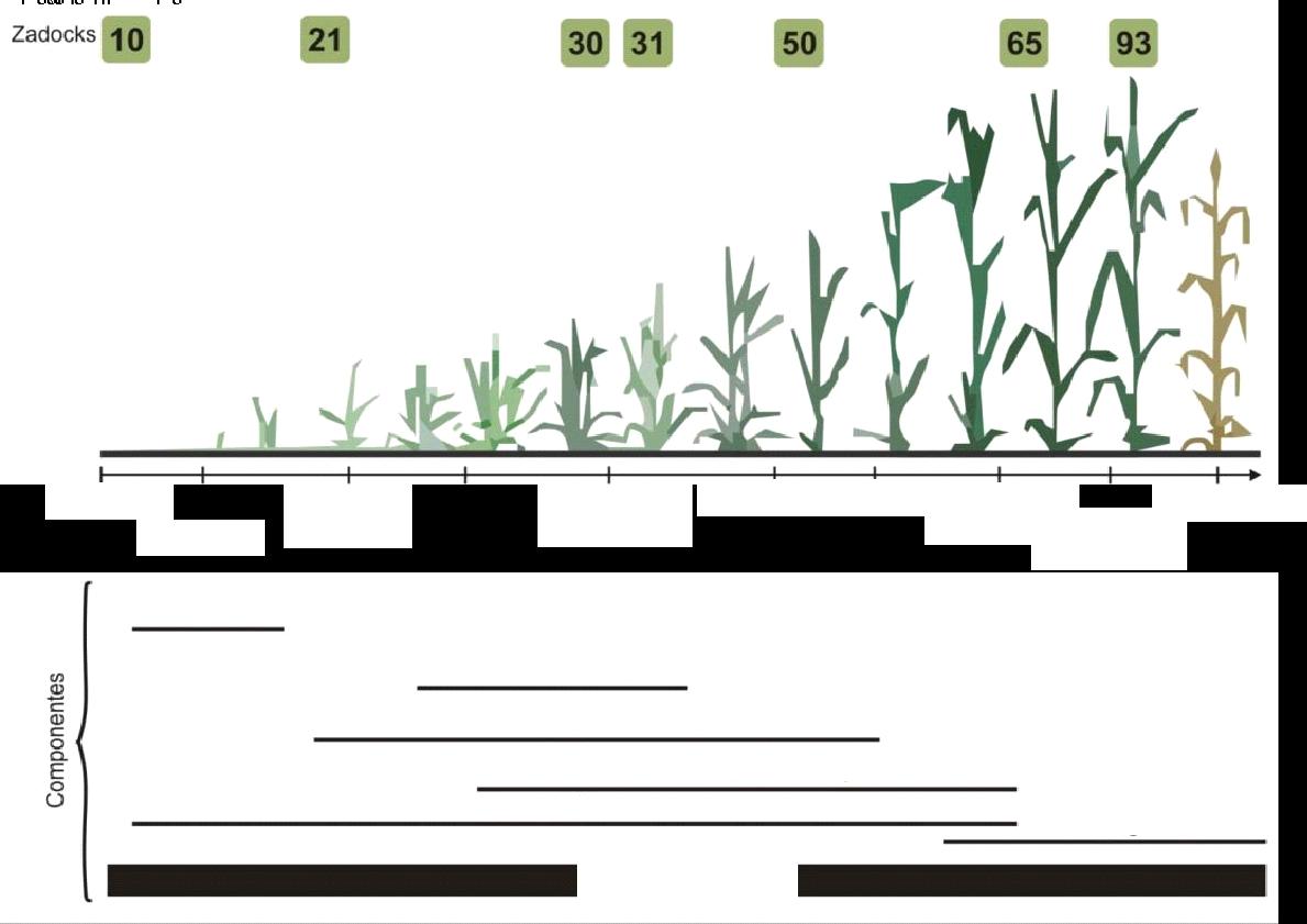 estádio fenológico do trigo