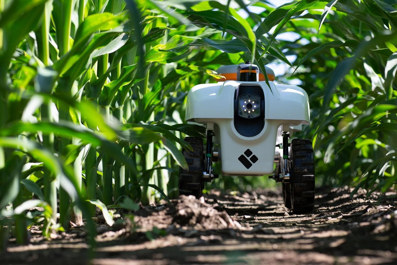 Inteligência Artificial na lavoura